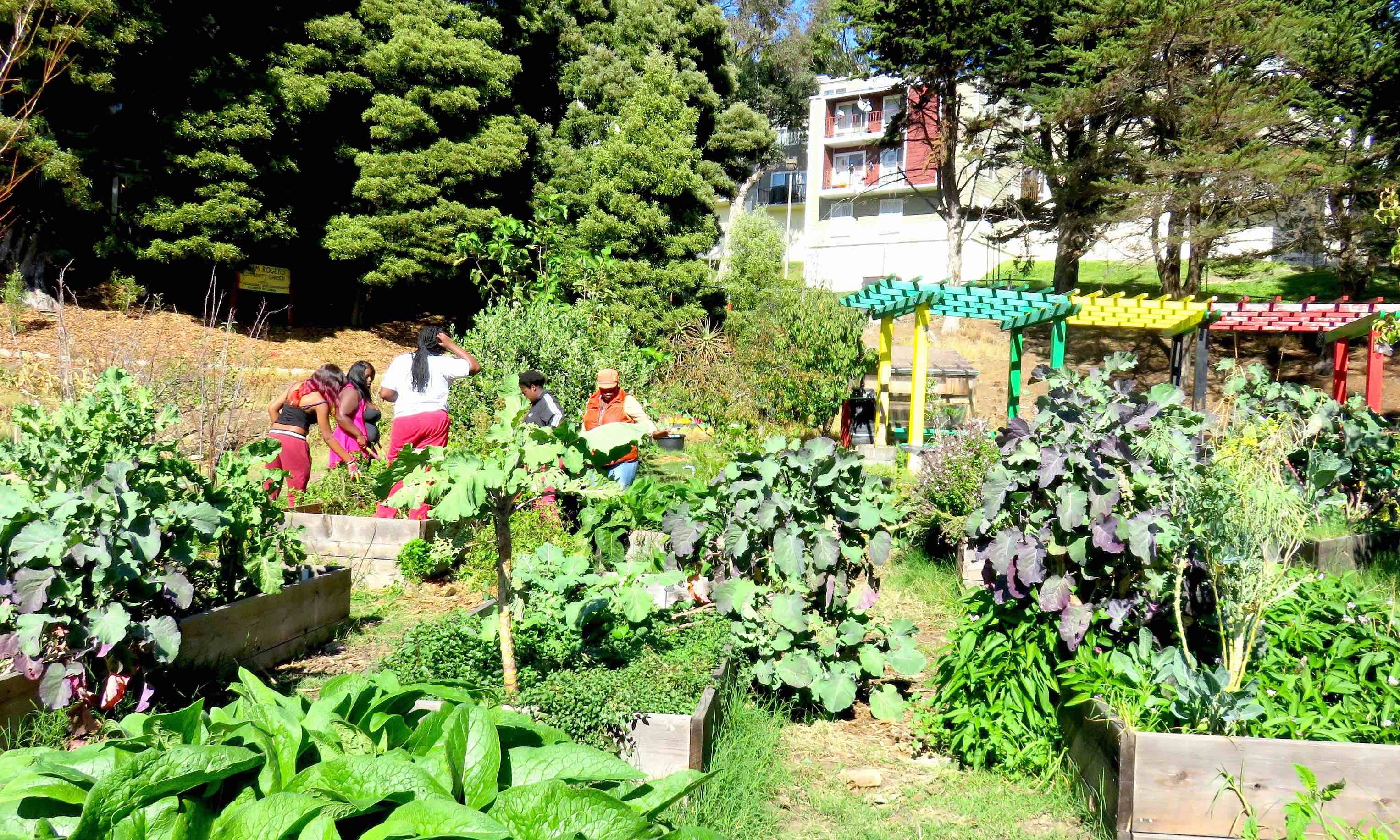 Permaculture in Hunter's point San-Francisco
